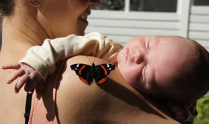Red Admiral in company of one of our twin boys