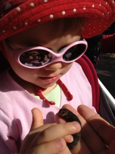 Caterpillar of the Elephant Hawk-moth being reviewed by Sienna