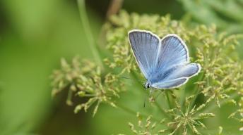 Amanda's Blue