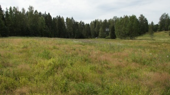 Habitat of the Silver-washed Fritillary