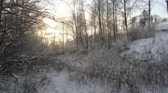 Habitat in winter