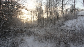 Habitat in winter