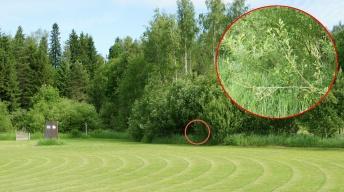 Location of caterpillar traces