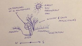 Sketch of caterpillar habitat