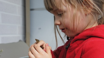 Sienna taking a close look at the tiny hairstreak