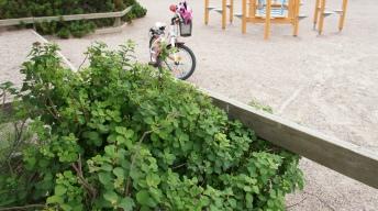 Growh on children's playground where caterpillar was found